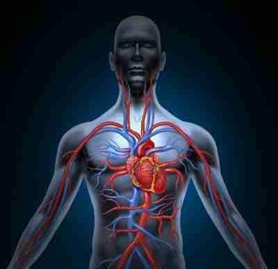 Beinschmerzen - Warnung vor einem Herzinfarkt - Natürliche..