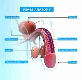 penis wund