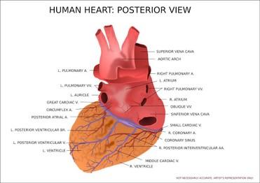 Herzinfarkt Was Ist Anders Bei Frauen Naturliche